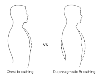 Chest-Breating-vs-Belly-Breathing.png